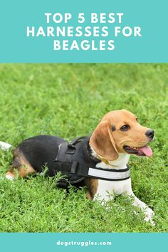10 Best Dog Toys For Beagles To Help Channel Their Energy Funny