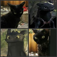 cats compared to Toothless from How To Train Your Dragon Funny Cat Memes, Funny Cats, Toothless Cat, Cute Baby Animals, Funny Animals, Cartoon Logic, Dragon Cat, Wings Of Fire Dragons, Dragon Memes