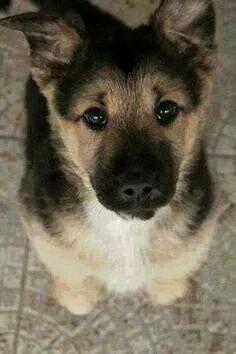 Whole Lotta Dogs Facebook post on 11/18/14