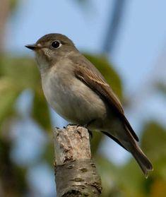 Tiny Bird, Hummingbirds, Asian, Brown, Brown Colors, Hummingbird