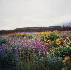 delta-breezes:those flower-filled hills by manyfires on Flickr.