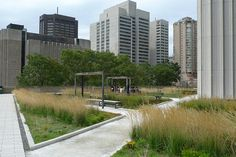 Toronto City Hall's green roof. Toronto became the first North American city to make installing green roofs on new commercial, institutional, and multifamily residential developments compulsory – now that requirements will apply to industrial developments as well.