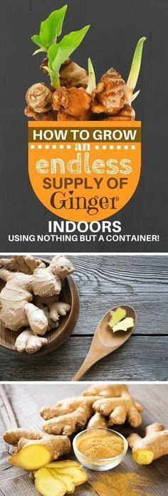 How To Grow An Endless Supply of Ginger Indoors Using Nothing But a Container #containergarden