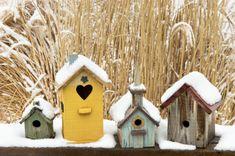 Building Birdhouses for your garden ~ ideas & tips