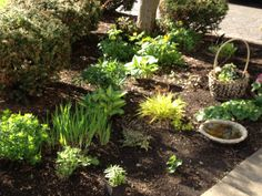 May 2014 front garden - chartreuse, yellow, green