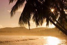 🌞 Silhouette of Palm Tree Near Body of Eater - new photo at Avopix.com    🆕 https://avopix.com/photo/40802-silhouette-of-palm-tree-near-body-of-eater    #beach #sea #ocean #water #sand #avopix #free #photos #public #domain