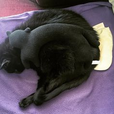 It has some time since I last shared our boy. He is fully recovered and I can't tell you what a relief it is. Soubi is such a love and caring #cat. He was in so much pain but wasn't aggressive not even for a moment. That's my boy! Wishing you a fabulous #caturday . #catsofinstagram #catlady #blackcat #black #pillow #cats #neko