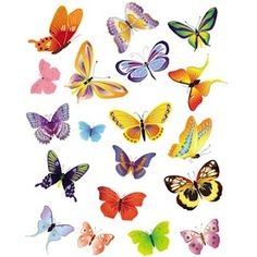 Free 19 Butterflies clipart in high quality, 5 x 5 inch size, 300 DPI.
