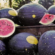 """Moon and Stars watermelon The dark green oval fruits are covered with pea-sized bright yellow """"stars"""" and usually one larger """"moon."""" Foliage is also spotted. The fruits have sweet pink flesh and brown seeds. Plant Theatre, Seed Starter Kit, Compost Soil, Cucumber Beetles, Cucumber Seeds, Organic Seeds, Stars And Moon, Sun Moon, Summer Garden"""