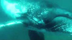 E' un professionista subacqueo Chris Coates, abituato ad immergersi e catturare la vita subacquea con la sua telecamera. http://tuttacronaca.wordpress.com/2013/10/25/quando-a-prendersela-con-il-paparazzo-e-una-balena/