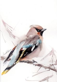 Original Watercolor Painting Waxwing Bird on a Branch by CanotStop