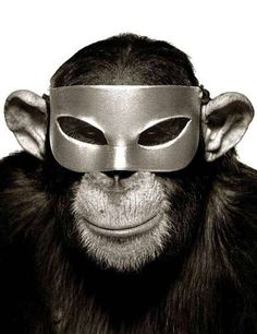 Monkey with Mask | From a unique collection of black and white photography at http://www.1stdibs.com/art/photography/black-white-photography/