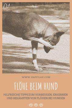Flohsaison ist immer! Wie du deinen Hund vor den fiesen Parasiten schützen kannst und wie du Flöhe am besten bekämfst, erfährst du hier. Aktiv, Movie Posters, Movies, Films, Film Poster, Cinema, Movie, Film, Movie Quotes