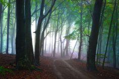 #1496930, path category - Pretty path pic