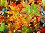 Mooi herfstblad