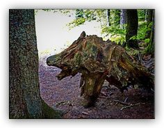 Oldrobel's Fotoreise: wooden wolf