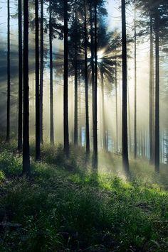 Poranek w lesie by  Mist73 on 500px.com