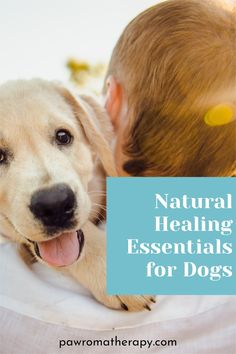 Our all Natural Dog Healing Essentials Set. One Healing Gel for Dogs in 2 oz or 4 oz size jar, one Herbal Ear Wash 4 oz and one Pet Dental Spray 1oz. Handcrafted by holistic veterinarian, Dr. Deneen Fasano. Handmade with all natural and organic ingredients, aloe, herbs and essential oils. Essentials, Pet Beds, Dog Quotes, Natural Healing, Dog Stuff, Aloe, Dog Tags, Your Pet, Dental