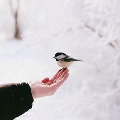 Stuck in a winter wonderland//
