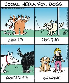 ♡♡♡ Social Media for Dogs: Liking, Posting, Friending and Sharing. Dog Quotes Love, Dog Quotes Funny, Dog Memes, Funny Dogs, Dog Humor, Dog Funnies, Pet Quotes, Humor Quotes, Funny Memes