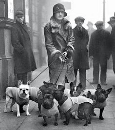 Vintage French Bulldogs, 1920's.