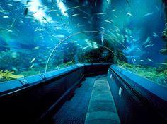 SEALIFE Melbourne Aquarium
