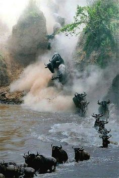 ♡crossing the crocodile infested river..you would run too....