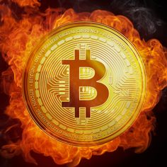 Palm beach confidential cryptocurrency november 2020