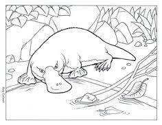 Image Result For Platypus Drawing Outline In 2019 Super Coloring