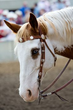 great face & eyes on this horsie
