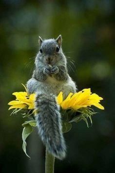 Love it .. sitting on a sunflower Mláďata Zvířat, Legrační Zvířata, Křeček, Srandovní Fotky Zvířat, Divoká Zvířata, Veverky, Zvířecí Království, Zábavné Vtipy O Zvířatech, Roztomilá Zvířátka