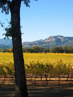 What is the Best Time to Visit Santa Ynez?