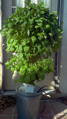 Aeroponic strawberry tower