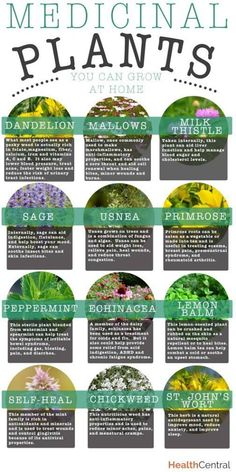 Medicinal Plants, and no not the fun kind, the good kind. Good to know, pin it for when you might need it.