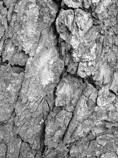 black and white edited tree bark