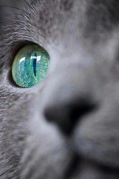 Beautiful green eye