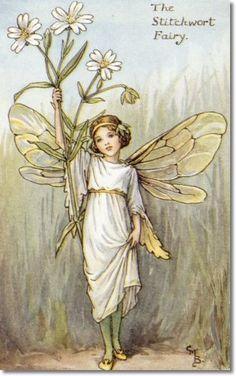 Cicely Mary Barker - Flower Fairies of the Spring - The Stitchwort Fairy Archival Fine Art Paper Print