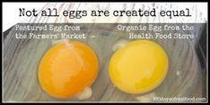 Farmer's Market Egg vs. Organic Egg. Decoding cage free, organic, vegetarian etc. labeling.