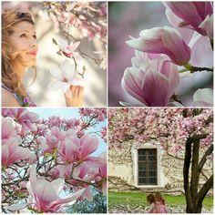 Leandra in sierteelt land: Magnolia nostalgie