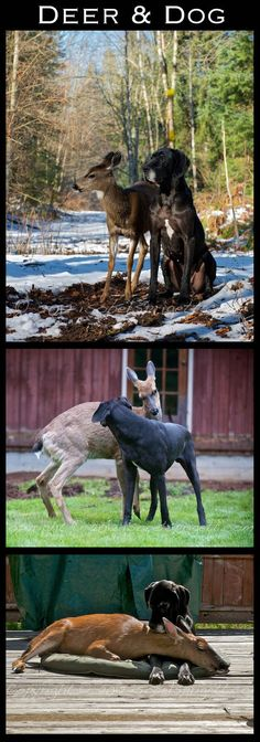 animal friends grew up together…