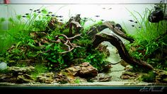 90x45x45cm Planted Aquascape - week 3 | Ive added 25 purple … | Flickr