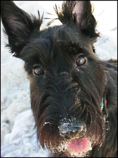 The Adventures of Ranger - the scottie pup: 2 of My Favorite Things