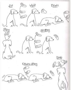 Dog Obedience Training Dog Training Hand Signals Chart - Dog tricks are a great way to take your dog training to the next level. Here are ten fun and easy tricks that you can train a dog to do. Basic Dog Training, Training Your Puppy, Deaf Dog Training, Obedience Training For Dogs, Service Dog Training, Agility Training, Race Training, Training Schedule, Strength Training