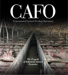 CAFO: The Tragedy of Industrial Animal Factories is a powerful indictment of modern food production. But as the book shows, it doesn't have to be this way. Ultimately, CAFO offers a compelling vision for a healthier food system: one that is humane, sound for farmers and communities, and safer for consumers and the environment.