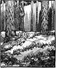 Tyrväntö-verkko, Pihkan metsäleikit