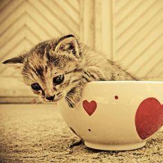 gatos tiernos y lindos - Buscar con Google