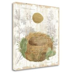 "Tangletown Fine Art 'Botanical Nest IV' Graphic Art Print on Wrapped Canvas Size: 24"" H x 24"" W"
