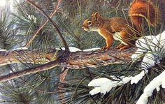 "Robert Bateman ""Red Squirrel"" 1992 Acrylic | par Plum leaves"
