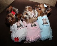 "These Yorkies are injoying ""National Dress Up Your Pet Day"" Yorkies, Yorkie Puppy, Teacup Puppies, Cute Puppies, Cute Dogs, Yorshire Terrier, Yorkie Clothes, Pet Day, Yorkshire Terrier Puppies"