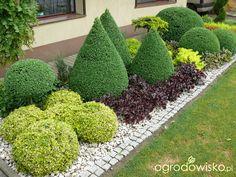 Ogród mały, ale pojemny;) - strona 120 - Forum ogrodnicze - Ogrodowisko